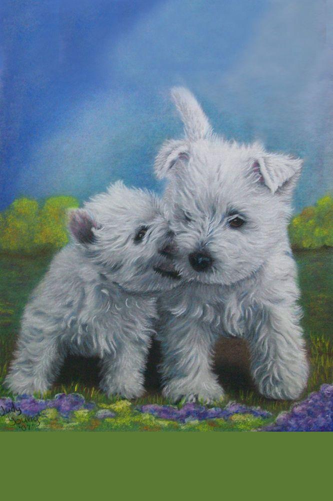 Buy Westie Puppies In Michigan USA