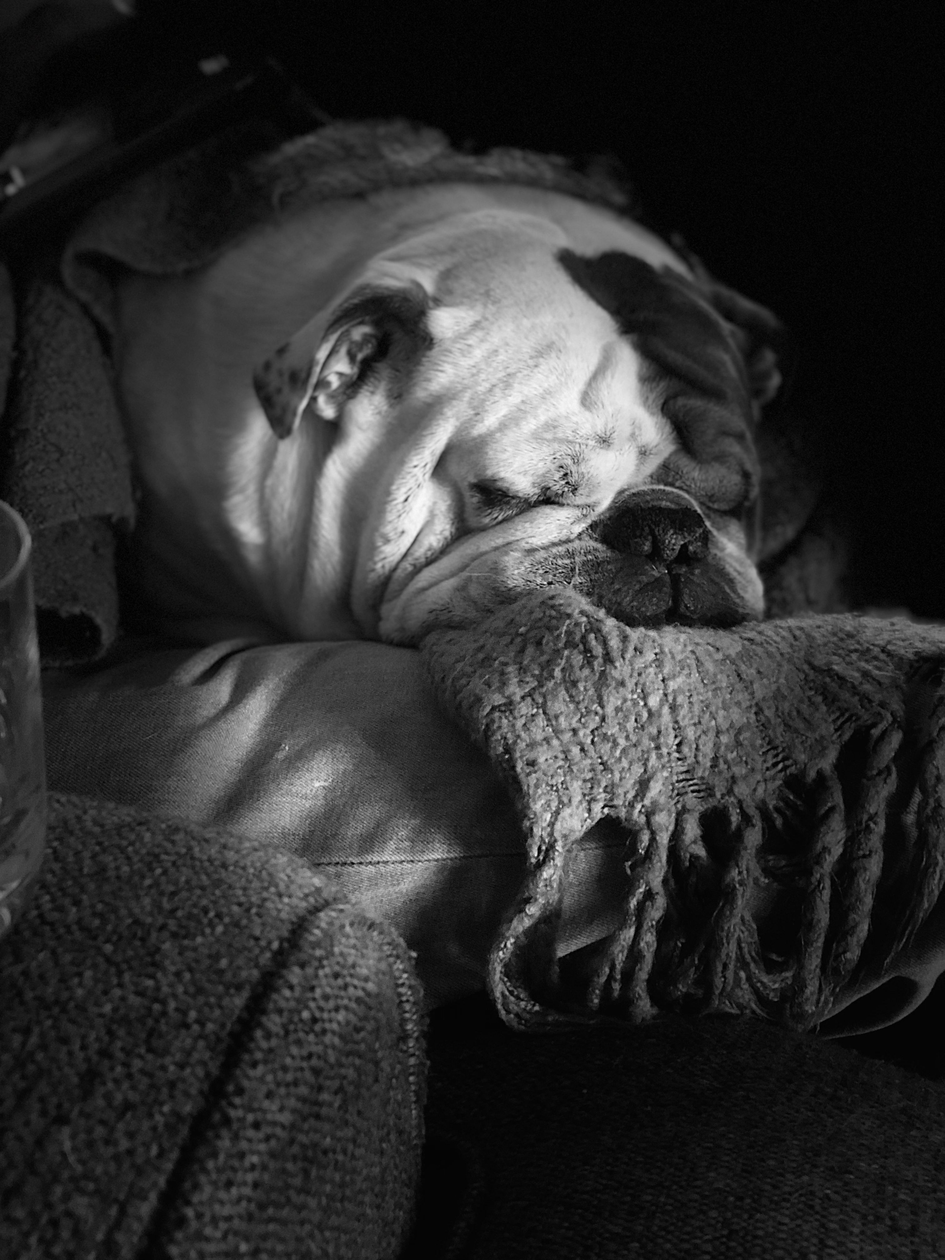 Pin By Emily Peterson On Animals English Bulldog Cute Bulldogs