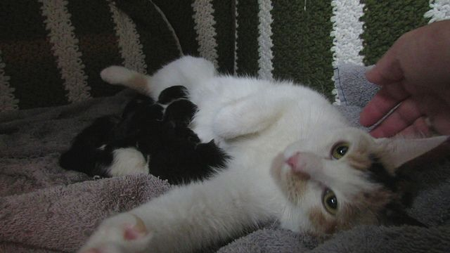 Little Family Video 3 Lilly Amp Her 2 Day Old Kittens Kittens Animals Cute