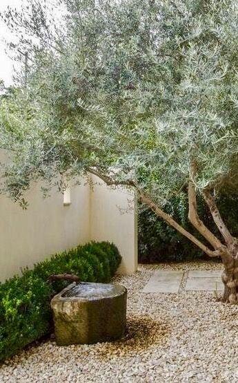 Gravel, fountain and olives...love! | Hayward\'s Garden | Pinterest ...