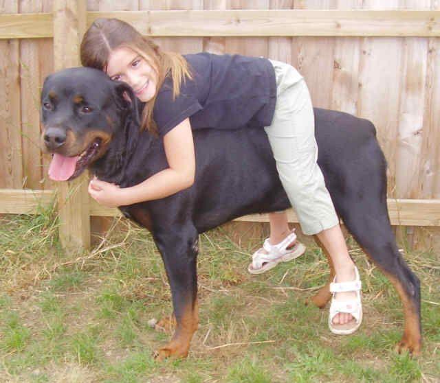 This Is My Rotties Dad Diesel From Guardian Rottweilers Website