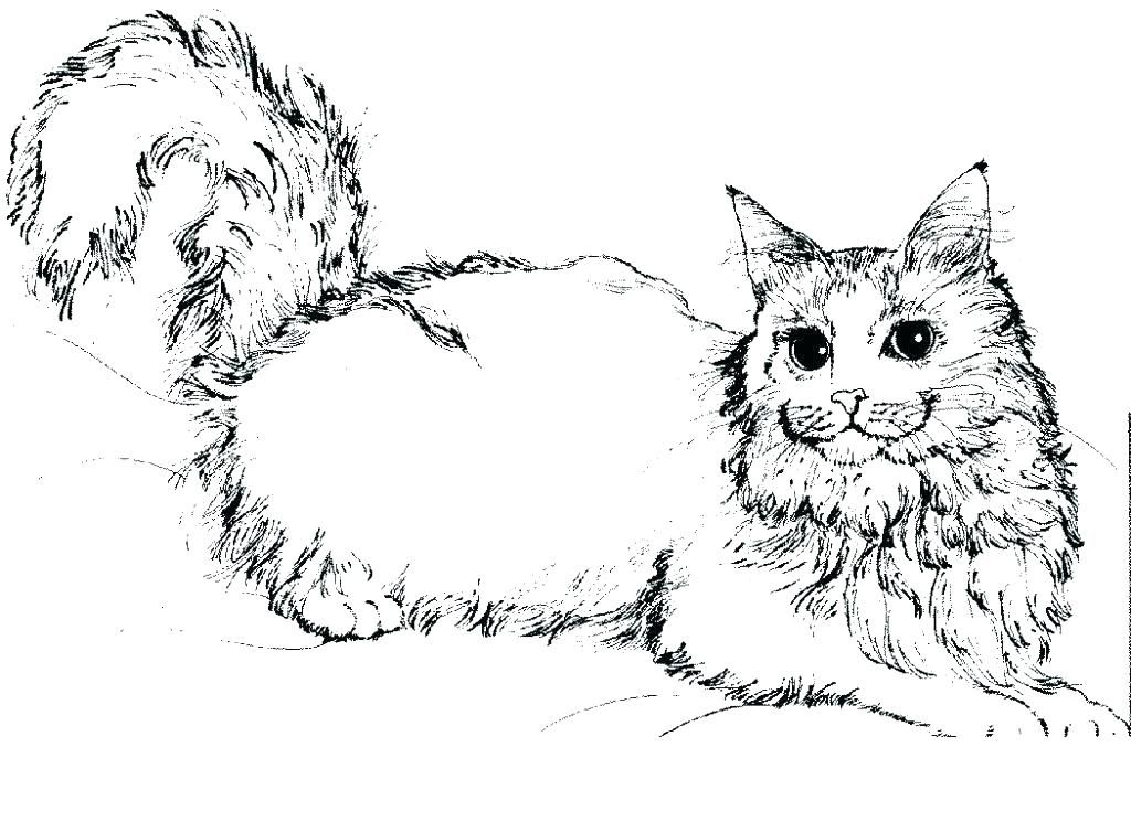 Wild Cat Coloring Pages H4426 Realistic Packed Rhpinterestmx: Coloring Pages Of Realistic Cats At Baymontmadison.com