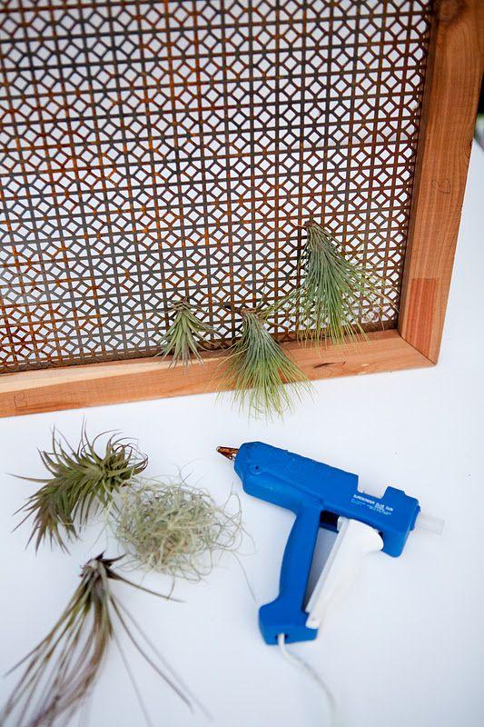 Make your own indoor air plant wall for the winter greens pinterest garten und deko - Diy pflanzenwand ...