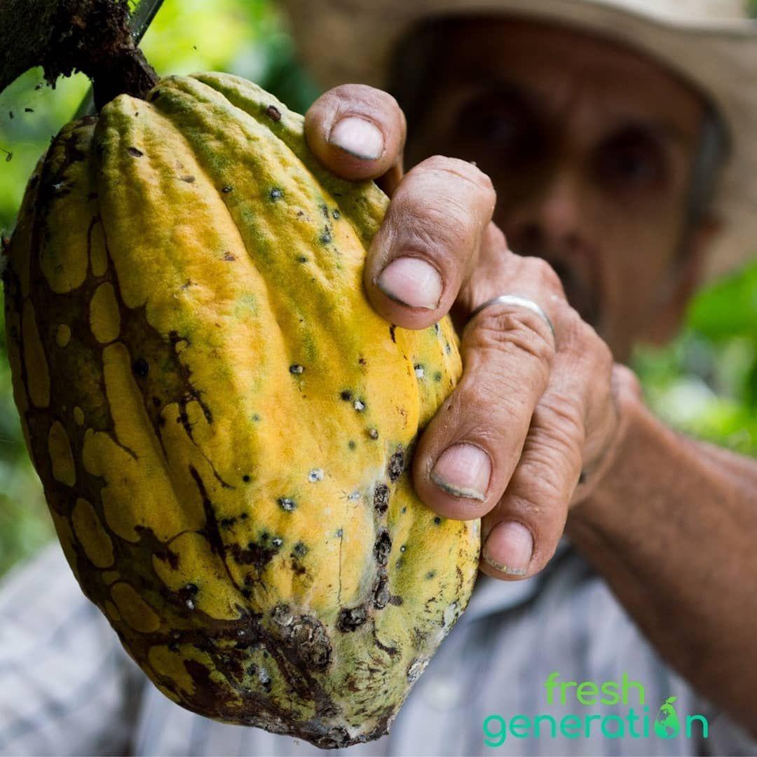El árbol De Cacao Siempre Estuvo Asociado A La Magia El Misticismo Y Lo Trascendental El Fruto Y Las Semillas D Real Food Recipes Human Nutrition Health Food