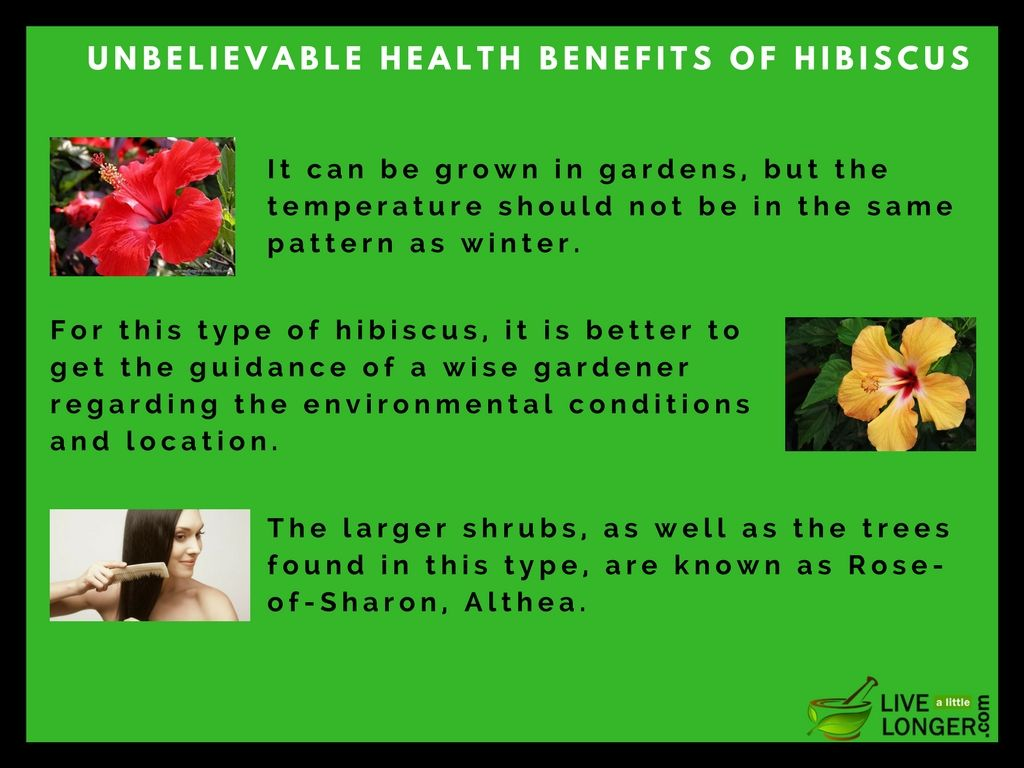 Hibiscus flower and tea withholds many unbelievable health benefits hibiscus flower and tea withholds many unbelievable health benefits it helps you to relieve from izmirmasajfo