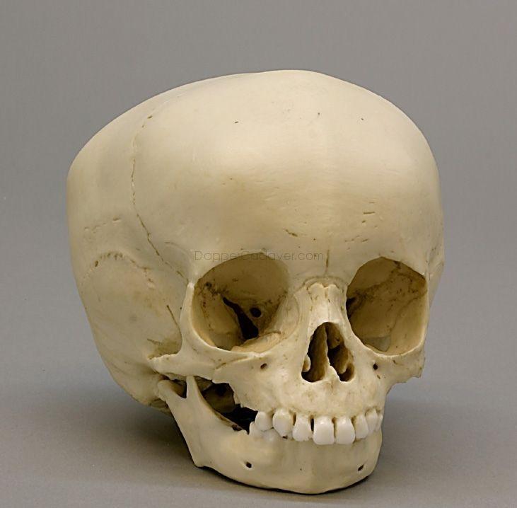 Baby Skull Anathomy Pinterest