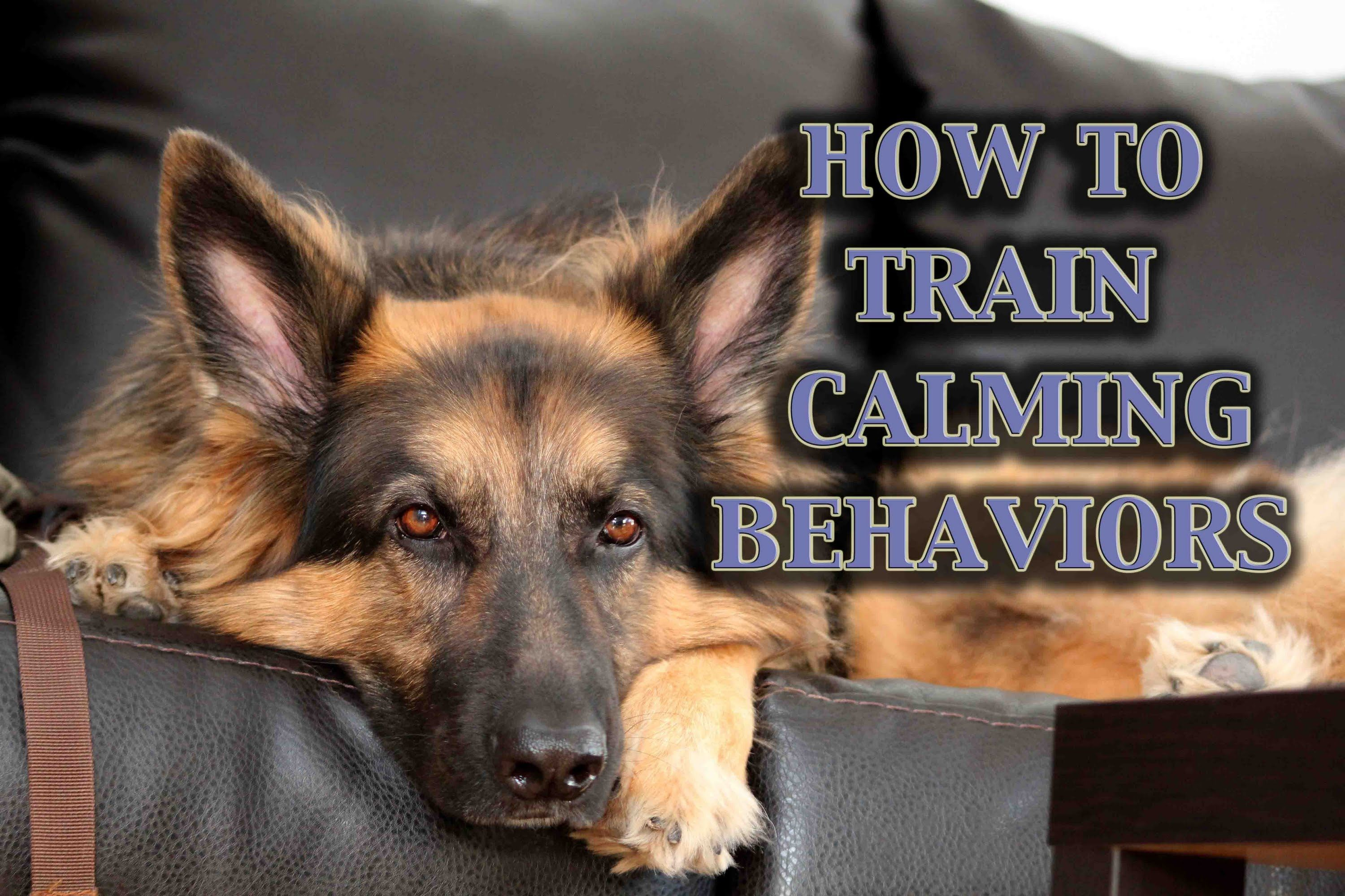 Best Dog Training Video Ever 11 Week Old Trained German