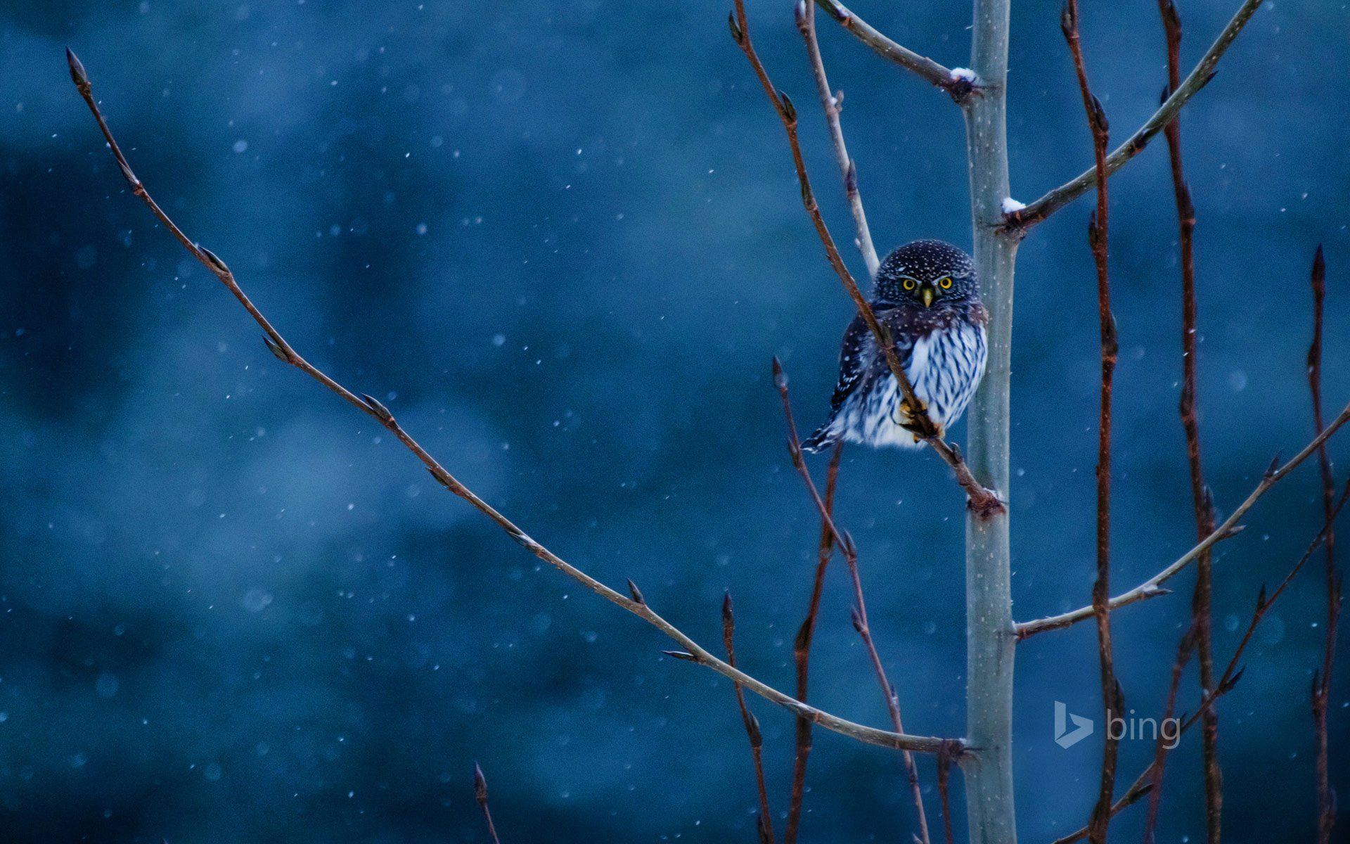Download Wallpaper Night Animal - 0397eef72d1f44994f46bf49e006520c  Collection.jpg