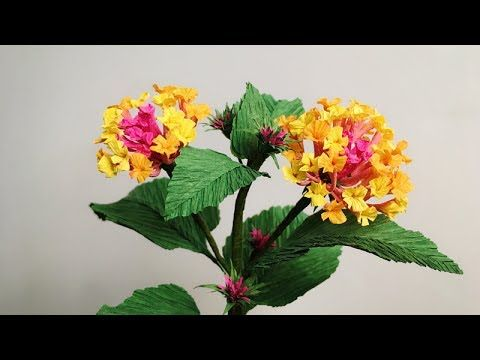 Abc Tv How To Make Lantana Camara Paper Flower From Crepe Paper