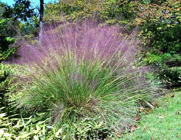 Gräser Für Den Garten gräser im garten grasbusch lila zukünftige projekte