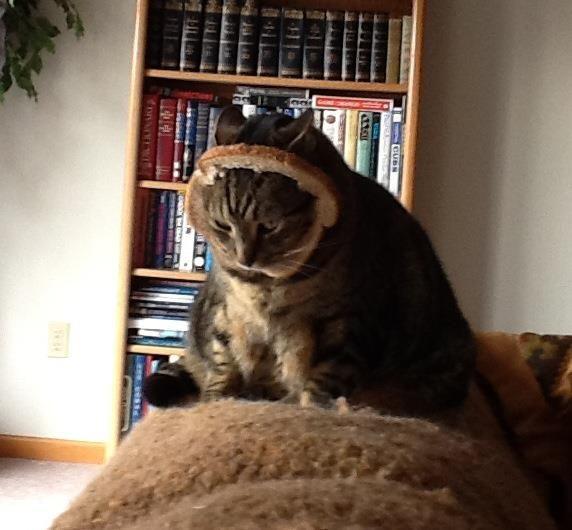 fat cat gets breaded