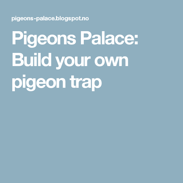 Pigeons Palace: Build your own pigeon trap