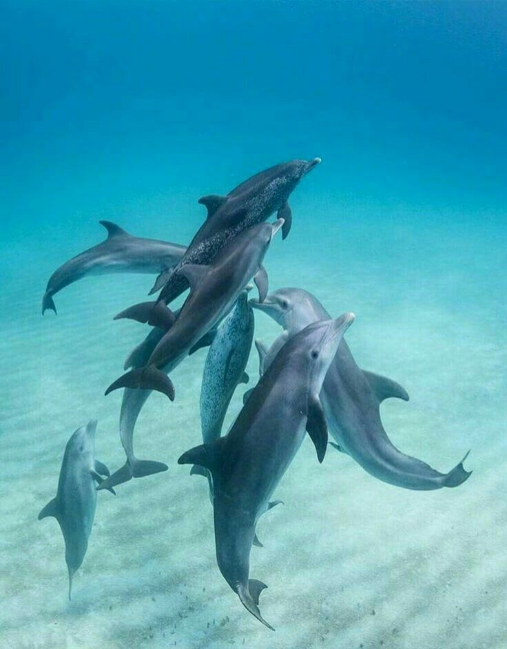 Pin By Marta Diniz On Golfinhos Dolphins