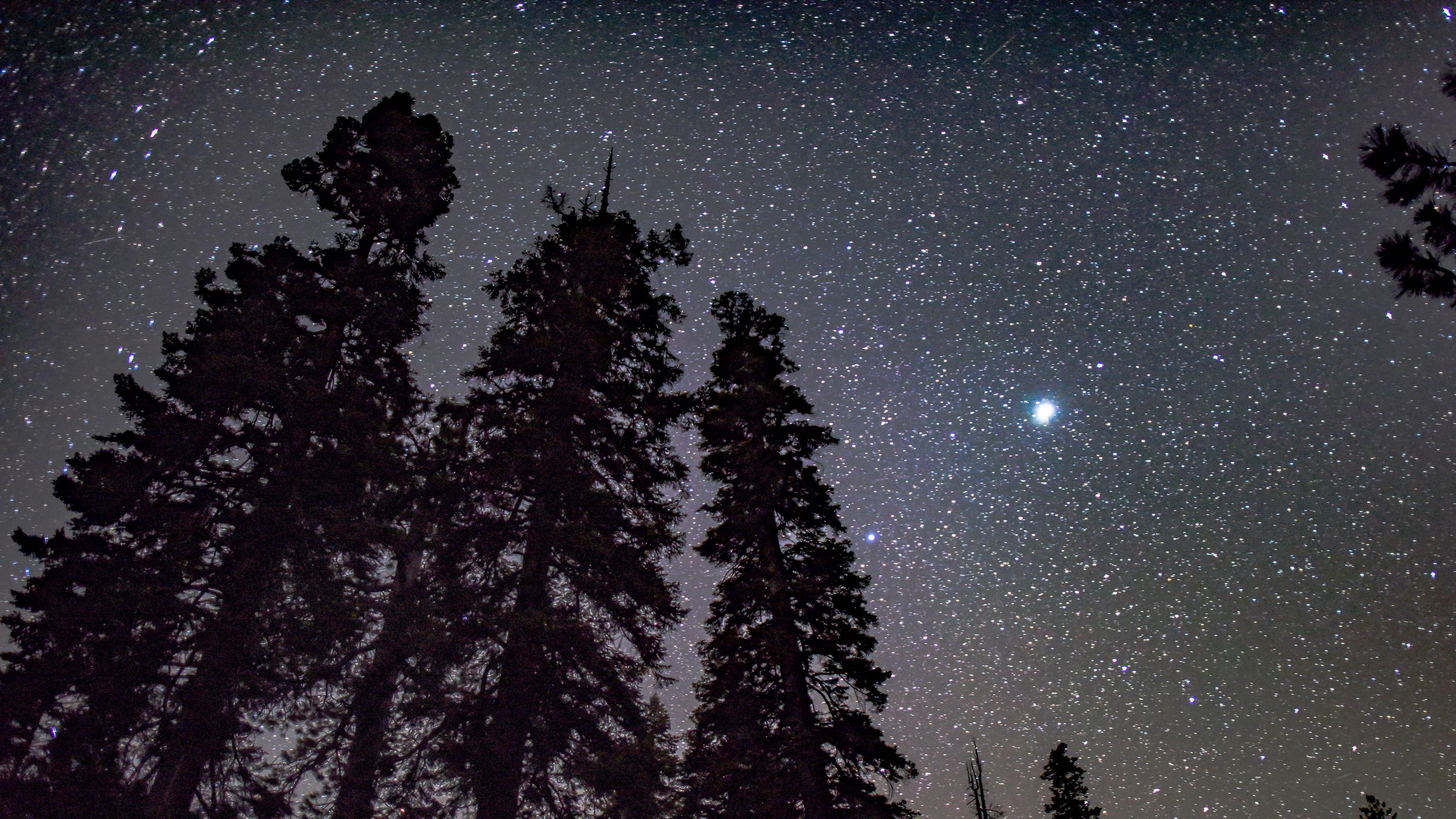 Wallpaper 4k starry sky, trees, night, stars, glitter