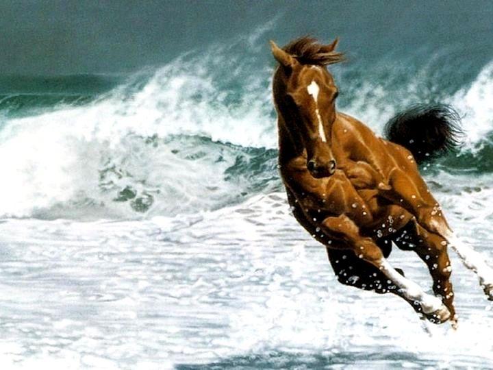 running horse wallpaper high resolution hd wallpaper