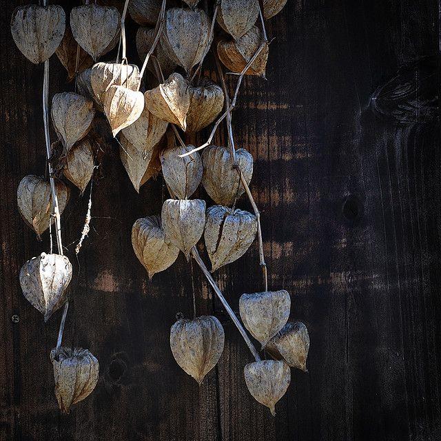 Faded Lanterns