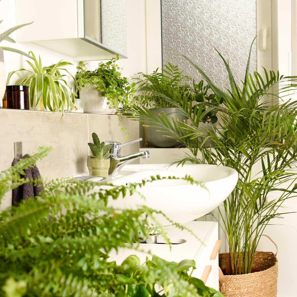 Pin Auf Plants Plants Plants