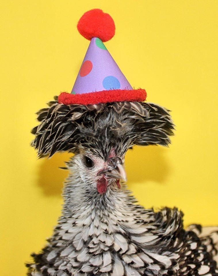 Happy Birthday Chicken   Fabulous Fowl   Happy birthday