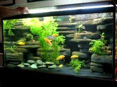 Animals For Fish Tank Background Ideas Fresh Water Fish Tank