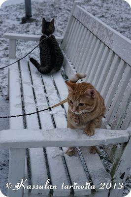 Kassulan tarinoita: Ensilumi / First snow