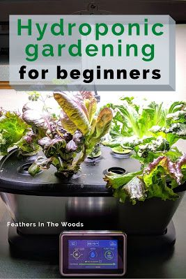 Photo of Hydroponic gardening for beginners