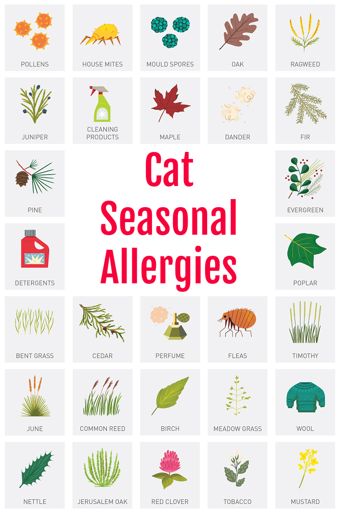 Cat Seasonal Allergies Seasonal Allergies Allergies Dog Care Tips