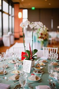Wedding jessnerhale our wedding details pinterest fan coral live orchid plant wedding centerpiece faux red fan coral shells and sea glass beach seaside theme red white aqua junglespirit Gallery