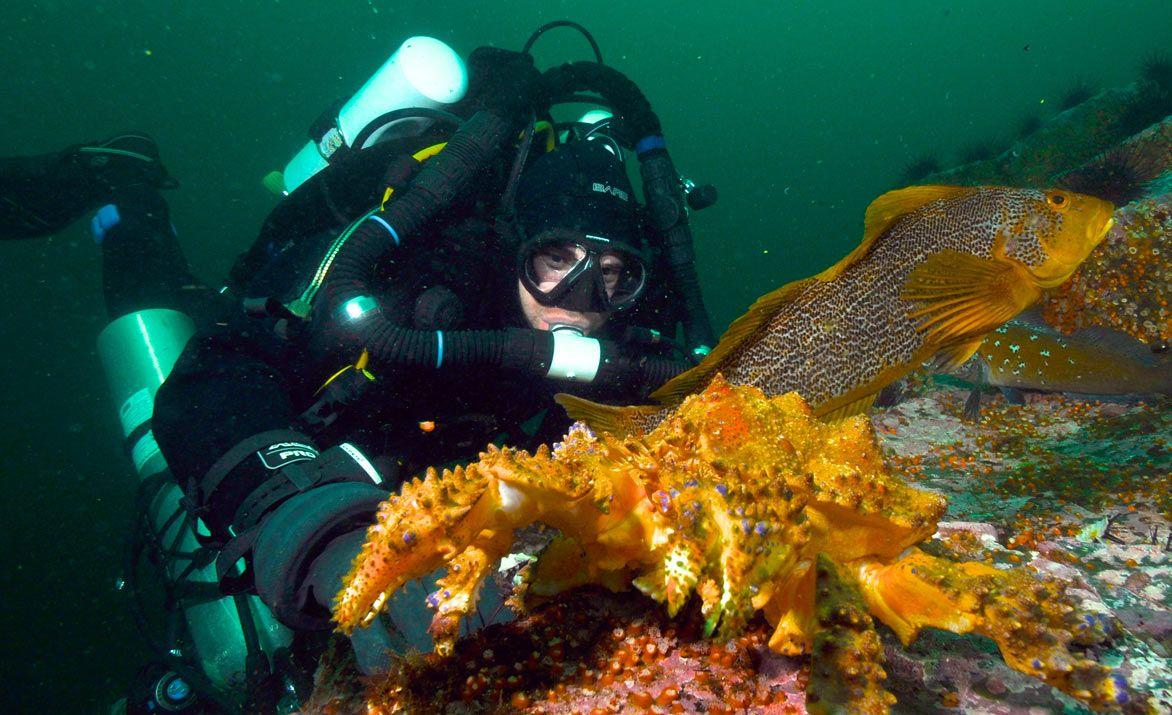 Pacific Pro Dive & Marine Adventures | Dive Charter - Pacific Pro Dive & Marine Adventures