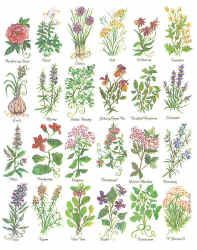 Alphabet Of Herb Species Comparing Leaves And Morphology Details