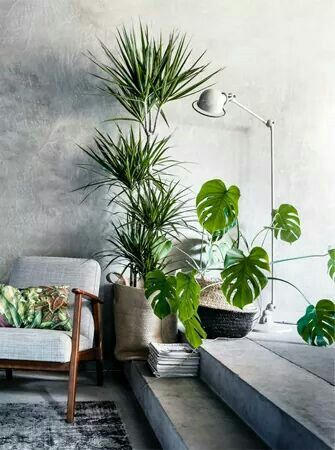 The Ultimate Guide To Houseplants For Your Homes   Part 1   The Interior  Editor