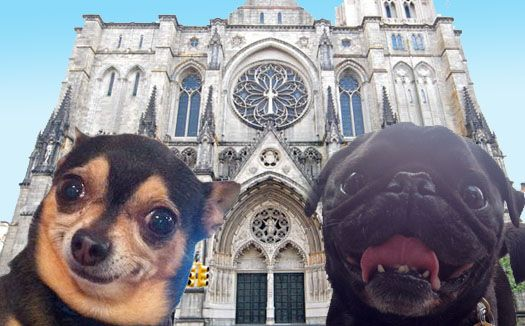 Cricket And Hamilton Pug Go To The Blessing Of The Animals