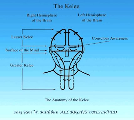 Kelee Meditation Groundbreaking Research On The Mind And The Anatomy Of The Kelee At Ucsd Mindfulness Meditation Anatomy