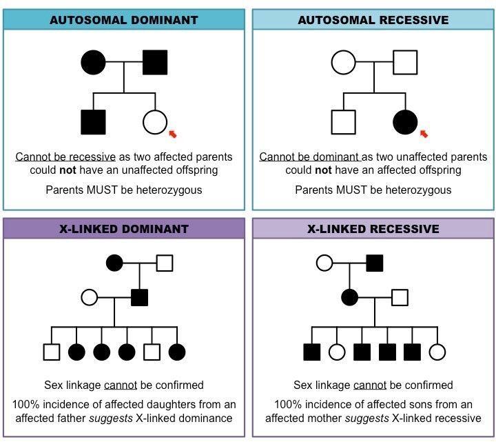 Pedigree Charts Inheritance Cheat Sheet Biology Lessons Science Biology Study Biology