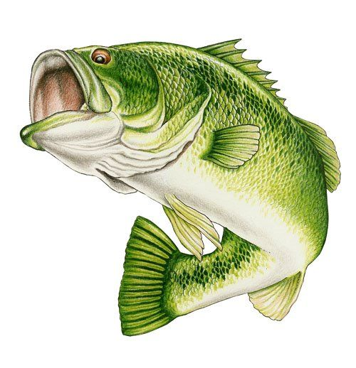 Wide mouth bass clip art wildlife art stained glass for Bass fish pictures
