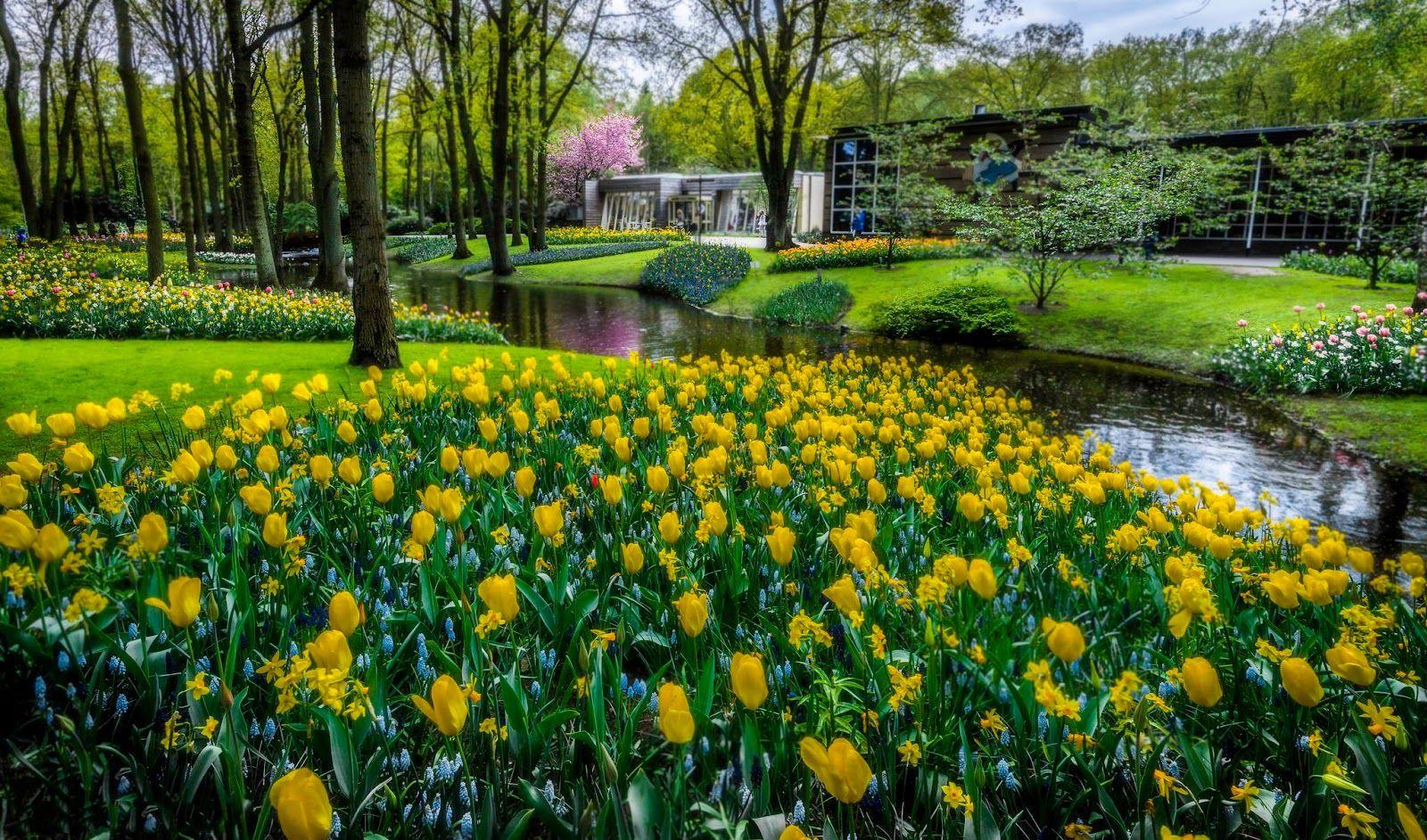 20 fotos de animales flores paisajes aves y autos - Diseno de paisajes y jardines ...