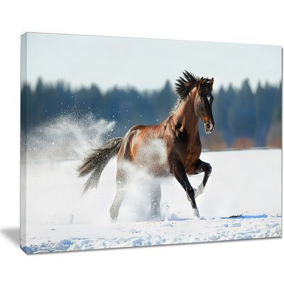 "DesignArt 'Horse Running in Winter' Photographic Print on Wrapped Canvas Size: 30"" H x 40"" W x 1"" D"