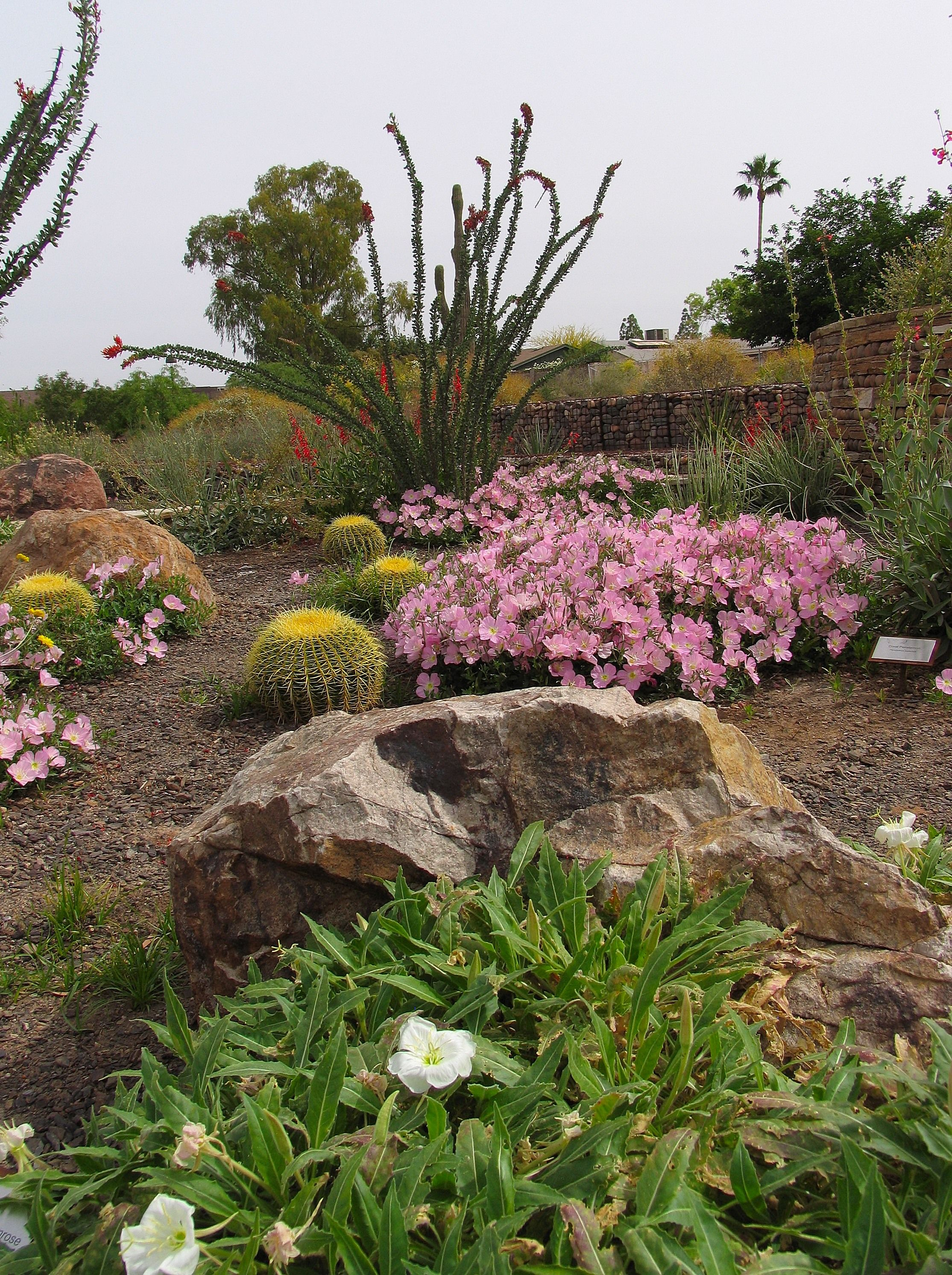 See Desert Plants in Action at a Demo Garden - Water Use ...