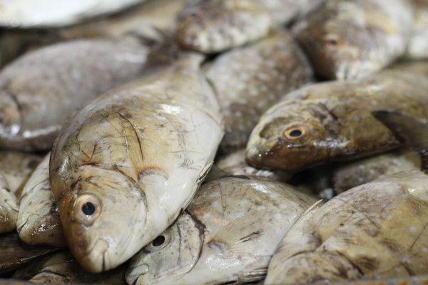 Safi صافي Fish Transporter Fish Sea Fish Fresh Fish