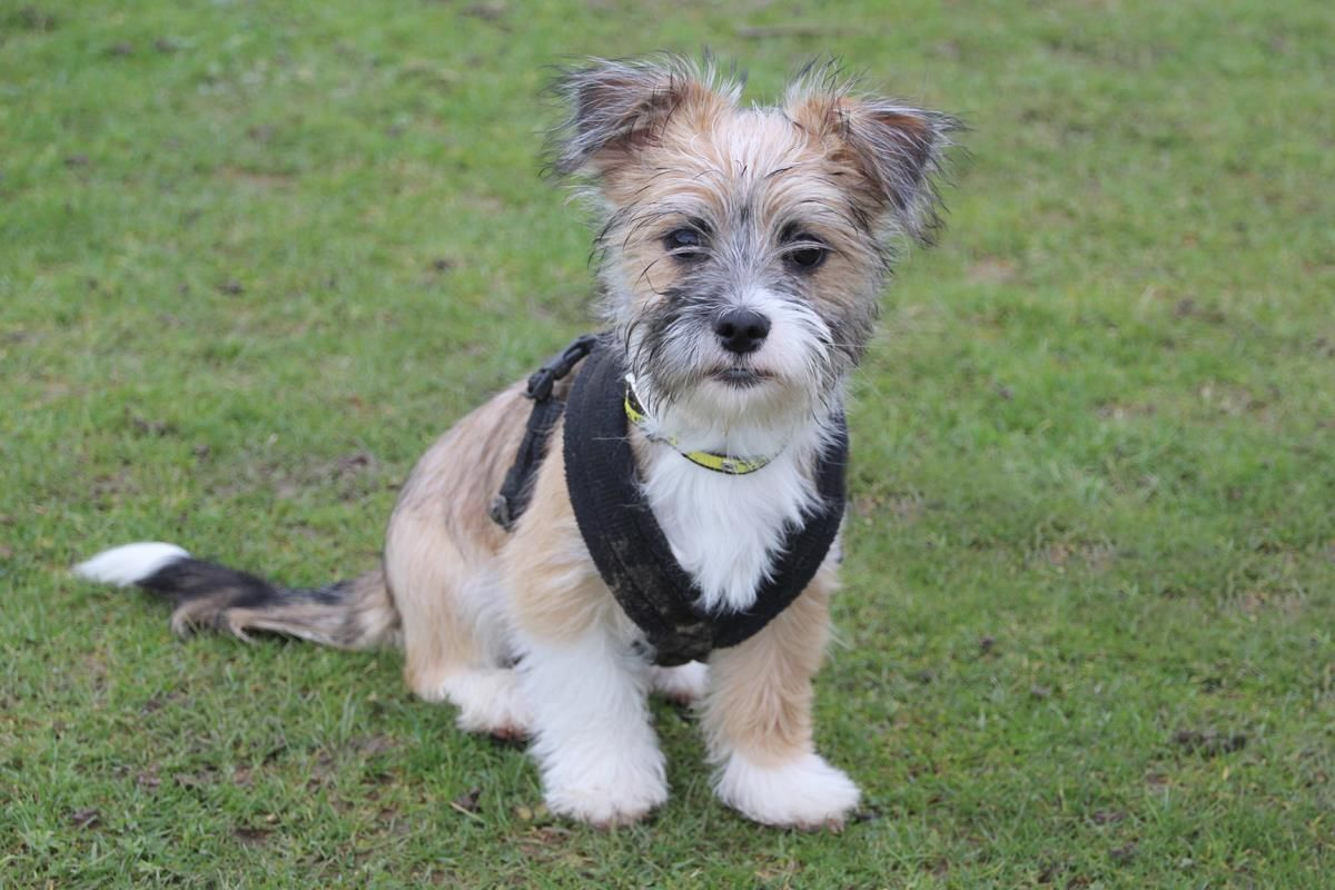 Rescue Dog Terrier Cross Gunner Dogs Trust in 2020