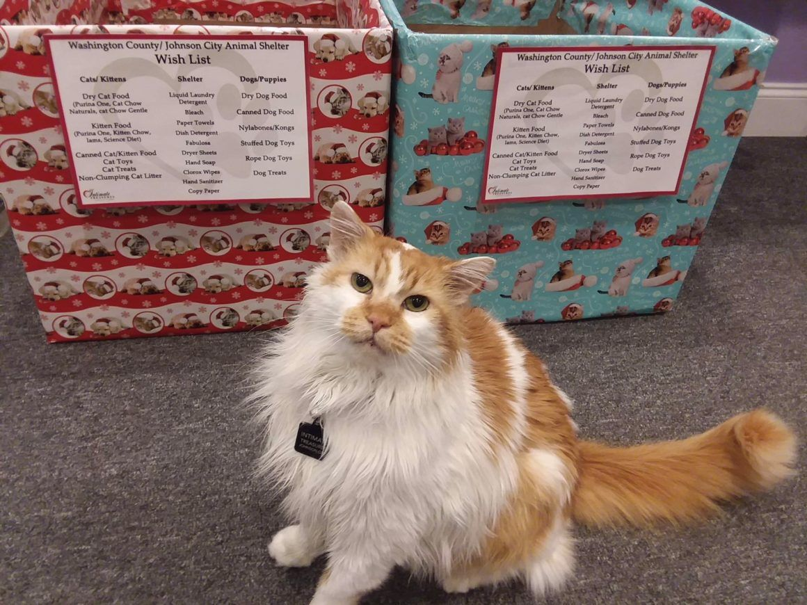 Local Business Give Back By Adopting Cats For Tri Cities Locations