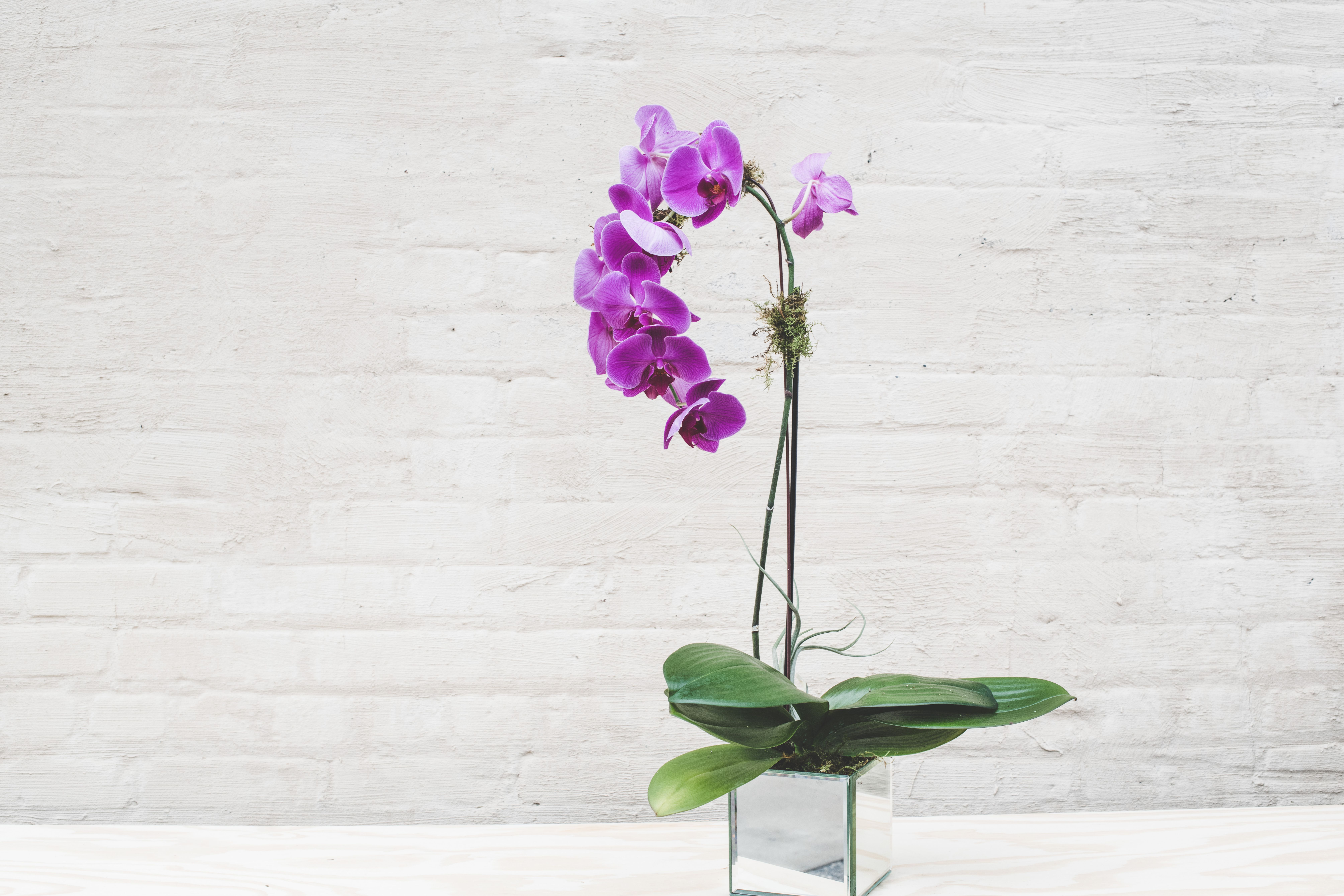 Reflective Orchid Get Well Flowers Sympathy Flowers Flower Delivery