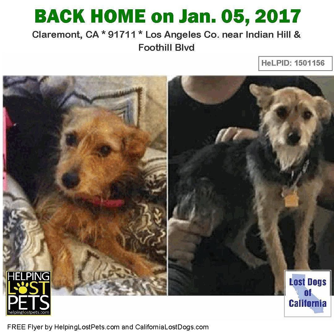 Backhome Lulu Lapierre Yorkie Mix From Claremont Ca Has Been Reunited With Her Family Lost Dec 31 2016 Back Home Jan 05 Losing A Dog Losing A Pet Dogs