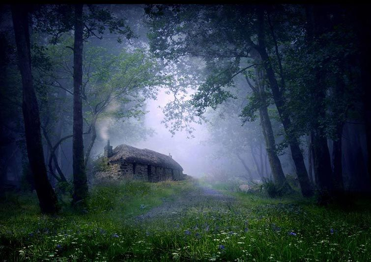 Cottage In The Woods Scotland