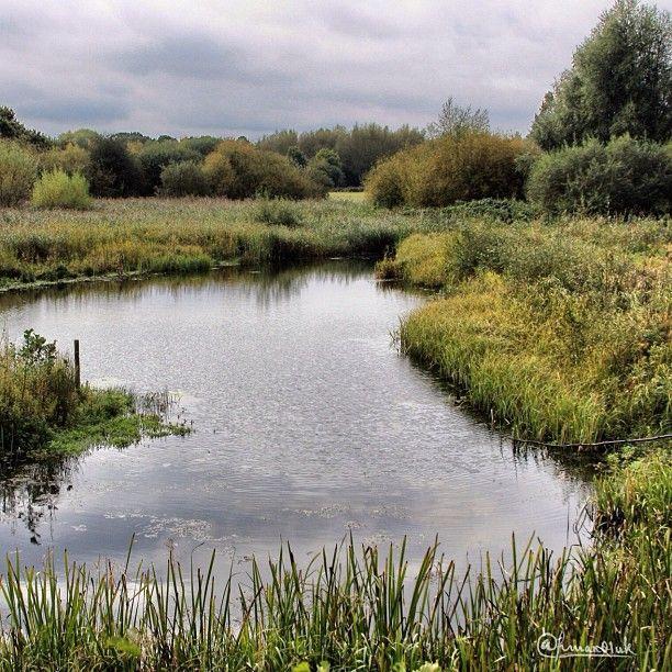 Kingfisher s perch on the right. Brandon Marsh, Warwickshire .. perfect fishing spot...