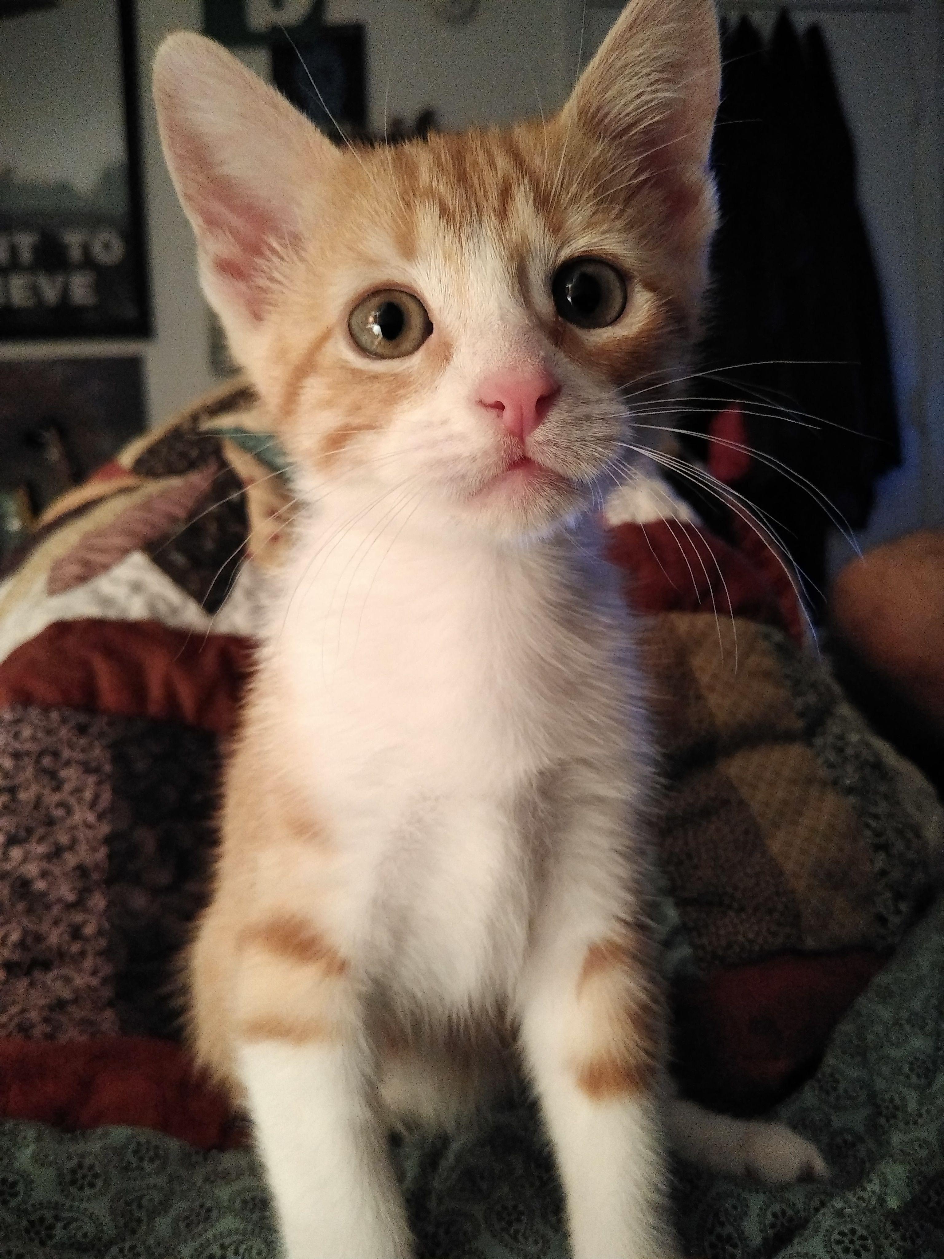 The Cutest Kitten cute cuteanimals kittens cats