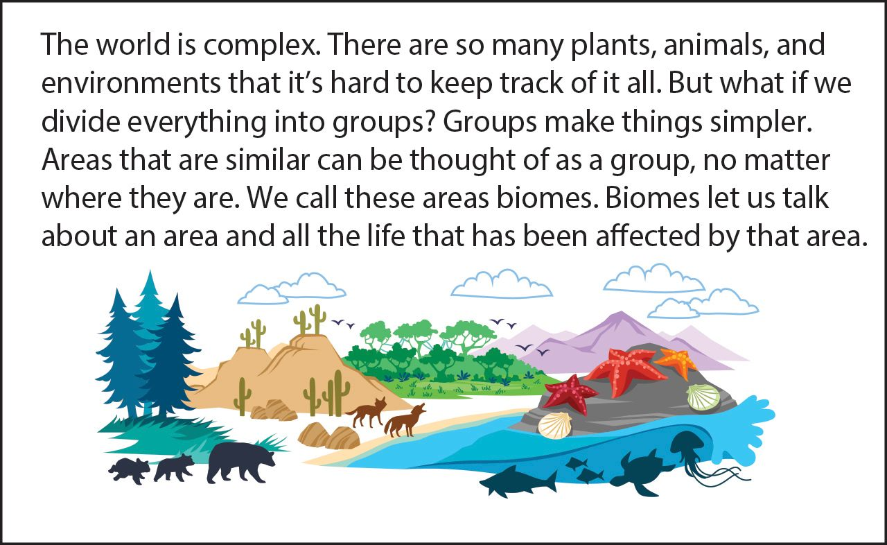 Biology Reading Flashcards Biomes Of The World Asu Ask A Biologist Biomes Biology Flashcards [ 786 x 1280 Pixel ]