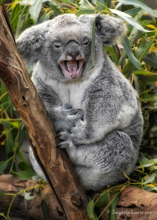 Belly Laugh © Laurie A. Rubin | All creatures great and ...