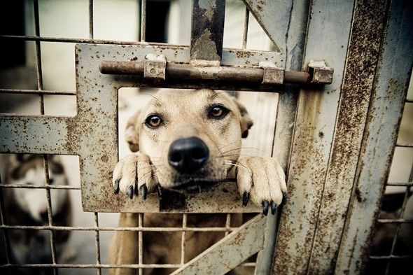 Funny Kinds Of Love The Ethics And Affects Of Human Animal Relationships Animal Shelter Save Animals Dogs