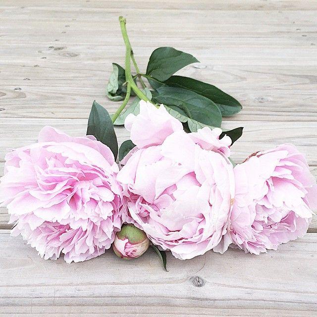 """440 tykkäystä, 54 kommenttia - • J O D I • Flowers & Flatlays (@jodianne_) Instagramissa: """"• peony love •  #gatheredstyle @aquietstyle"""""""