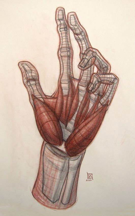Pin by Rose Antons on draw   Pinterest   Anatomy, Hand anatomy and ...